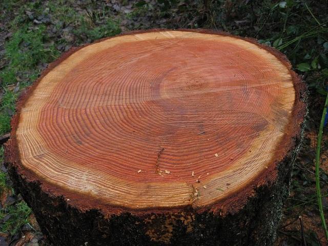 Câu trả lời cho thắc mắc thớ gỗ là gì.