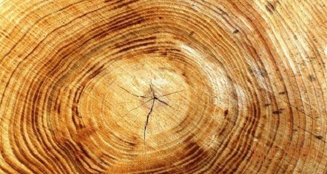 Hướng dẫn cách xử lý vân đen gỗ nhanh chóng hiệu quả