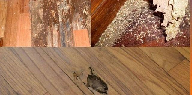 Tình trạng gỗ bị mọt – Đâu là nguyên nhân và cách xử lý?
