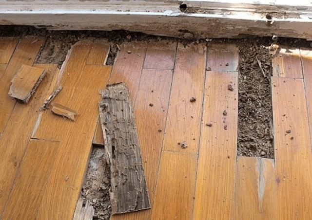 Tình trạng gỗ bị mọt gây hao hụt chi phí tài sản rất lớn.